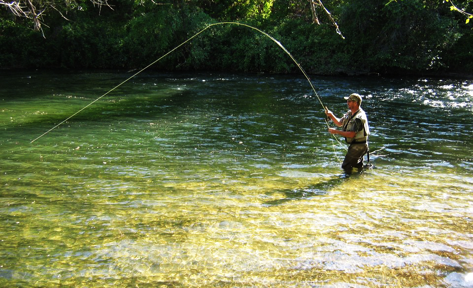 Napa valley fly guides fly fishing guide on putah creek for Putah creek fly fishing